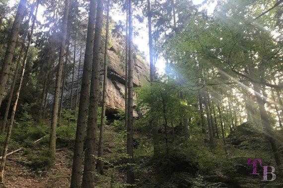 Affensteine Sächsische Schweiz Felsen Wald Sonne Strahlen