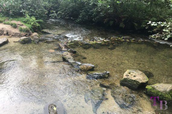 Affensteine Sächsische Schweiz Kirnitzsch Wasser