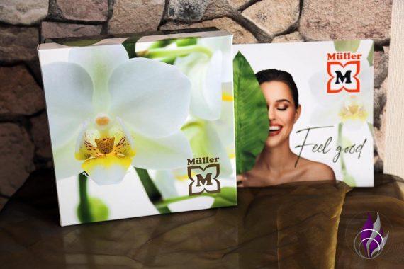 Müller Look-Box Orchidee Feel good
